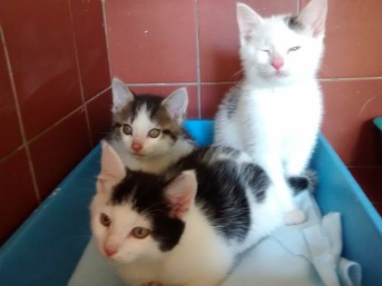 three kittens from Haregate