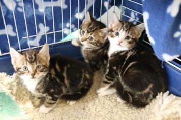 Winkhill Kittens