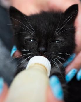 Kittens_0011