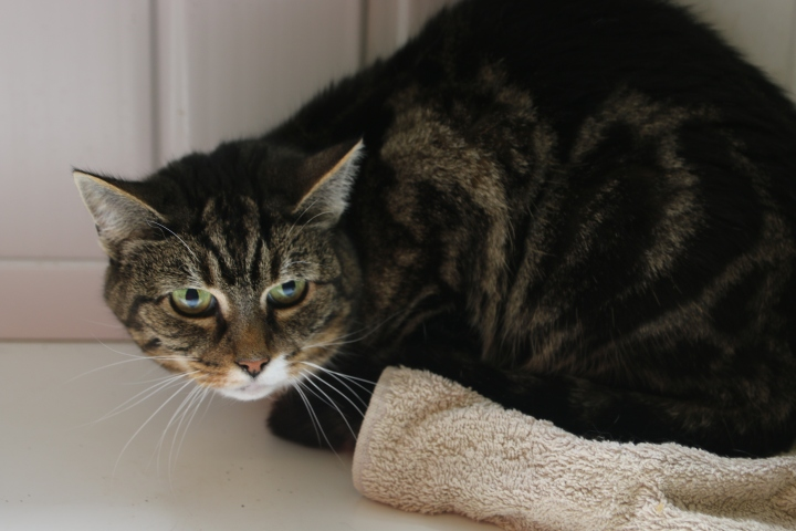 Tibbs owner sadly passed away.  He did live with Poppy but tended to be the dominant one.  He is quite reserved with people and is at least 10 years old.